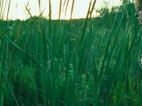 Паскаль Бюссьер голая, Валери Блэйн голая - Болота (2011) #2
